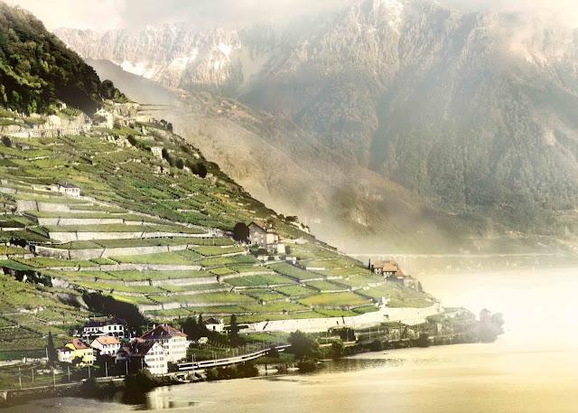 Lake and wineyard fileds