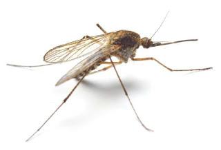 """فيروس """"زيكا"""" يجتاح العالم ومنظمة الصحة تحذر من وباء عالمي"""