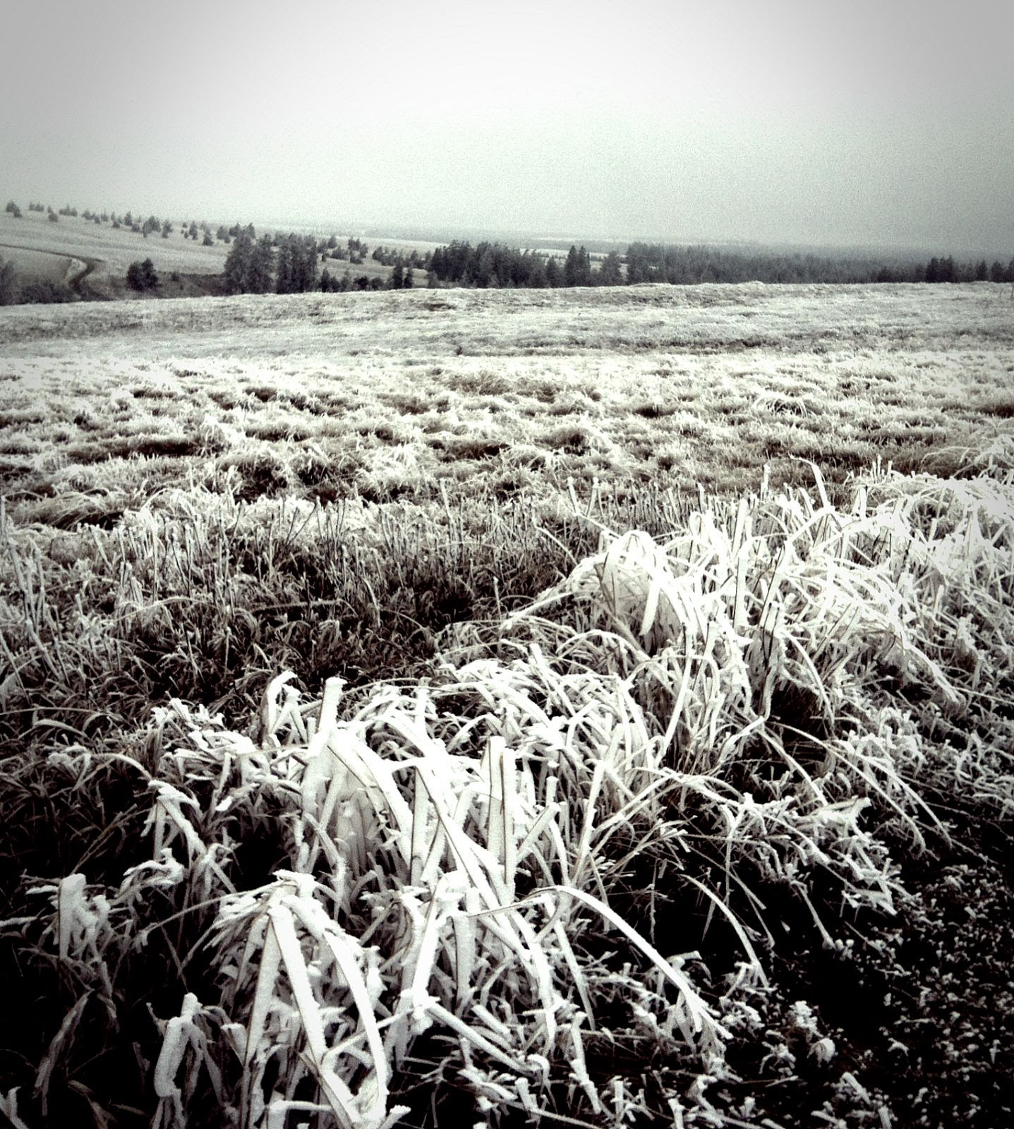 Frost Field, photo by Lorie Klahn (c)