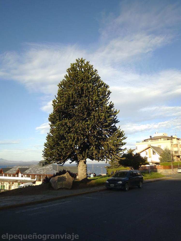 Araucana, Bariloche,
