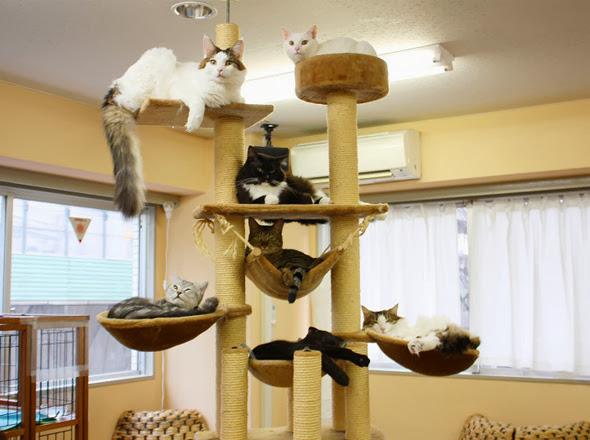 Gatos de Le Café des Chats