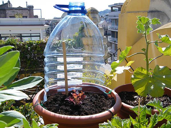 Idea contra el viento de mi terraza mi huerto urbano - Huerto en la terraza ...