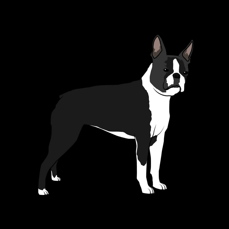 Boston Terriers Rule!