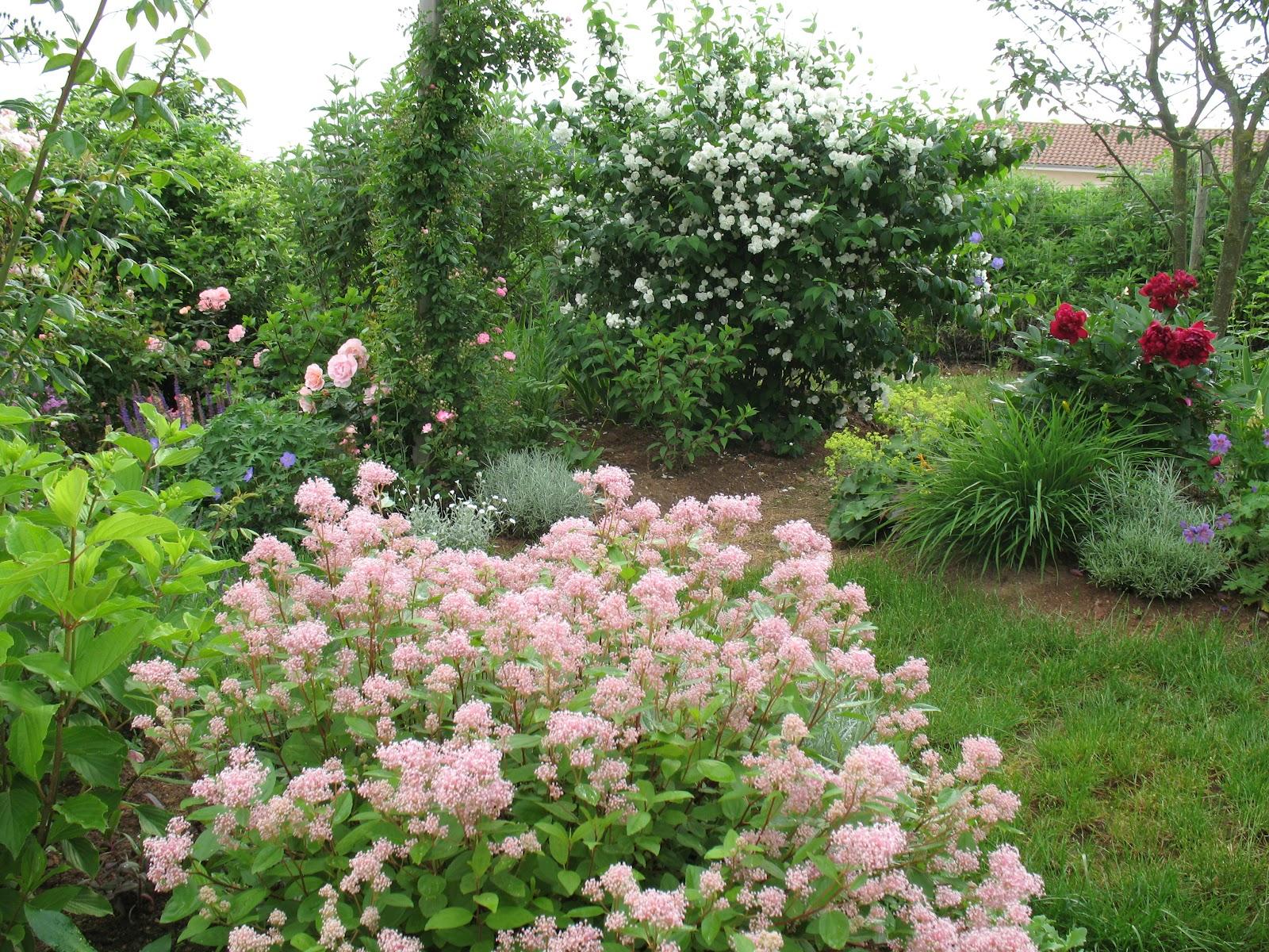 Roses du jardin ch neland seringat coronarius for Au jardin de ma grand mere