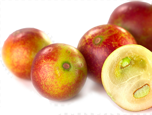 manfaat buah Camu Camu Berry Amazon