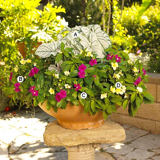 New Home Interior Design Container Garden Recipes for Shade