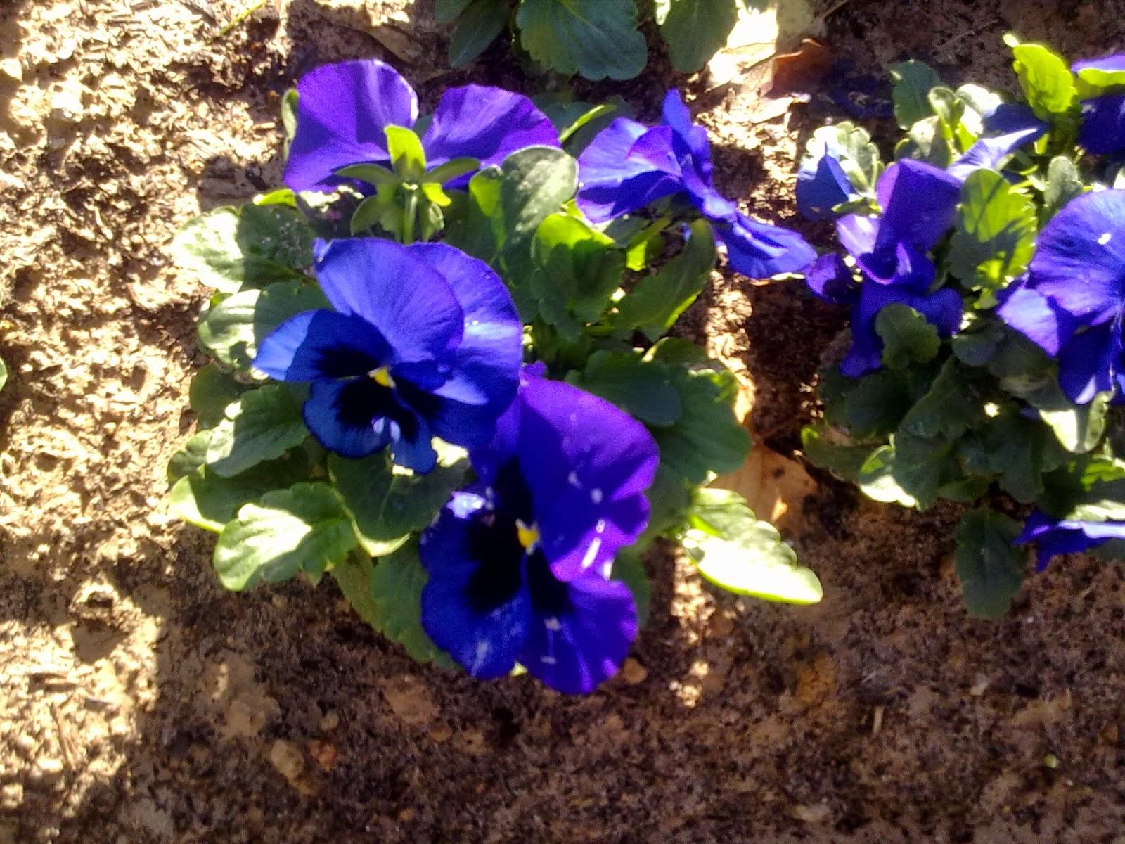 Cuento lo que me sale ideas para primavera plantas - Plantas muy resistentes ...