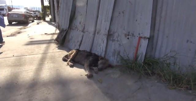 perra al borde de la muerte