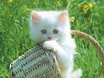 comel kucing ni =)