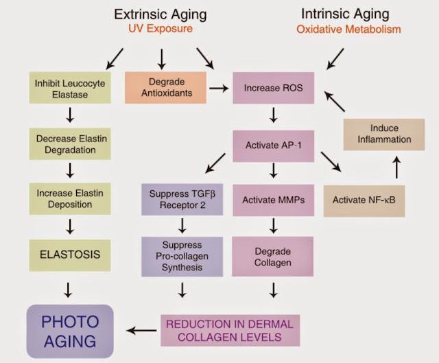 anti aging process