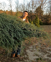 Look Kids, A Real Xmas Tree - Dec11