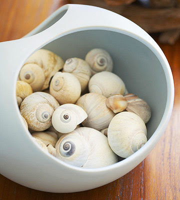 shell collection in bowl
