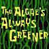 Bob Esponja - Temporada 3, Capítulo 1: Las algas siempre son verdes