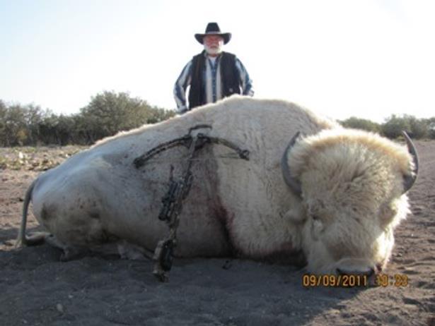 Image result for bison white