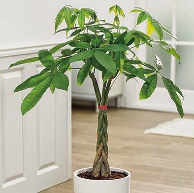 Best indoor plants suitable for your home - Best plants for home ...