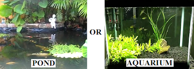 choosing pond aquarium