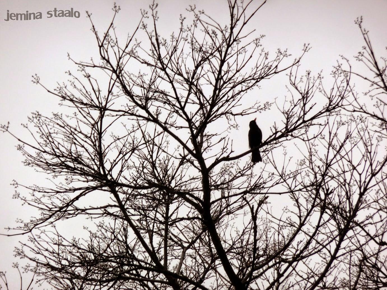 /ikuisuusaihe-lintu-ja-puu