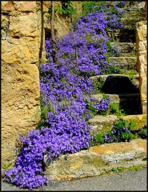 Grönskande trappa