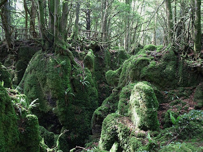 Puzzlewood - Tolkien's Inspiration for Middle-earth Seen On www.coolpicturegallery.us