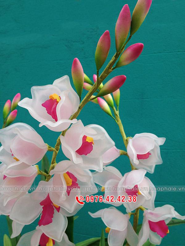 Mẫu hoa địa lan trắng