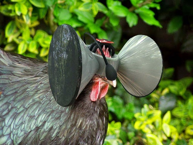 chicken with VR headset