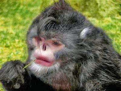 Fucked a ape