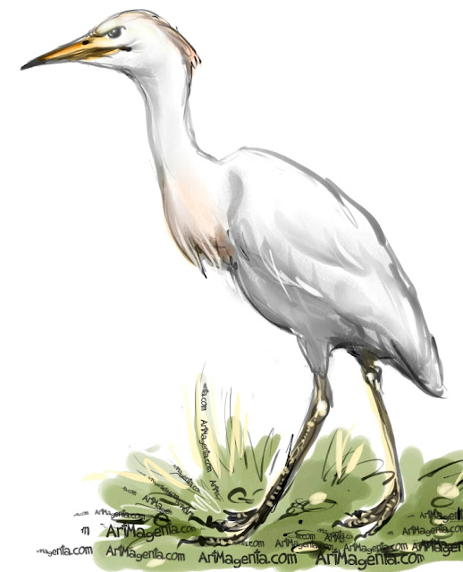 Cattle Egret is a bird painting by Artmagenta