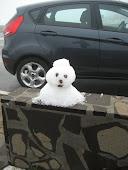 A neve chegou á Madeira