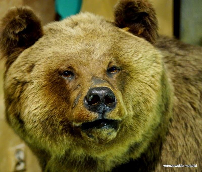 Warszawa Łazienki Królewskie zwierzęta egzotyczne niedźwiedź las