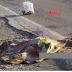 حادثة سير مميتة على الطريق  الوطنية رقم 1 ذهب ضحيتها دركي وسيدة وأصيب خلالها ثلاثة أشخاص إصابات بليغة ...