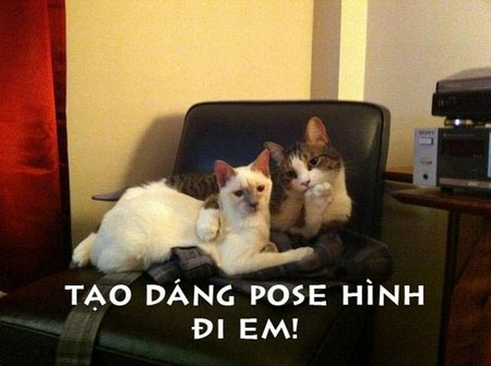 Hình ảnh vui về Mèo