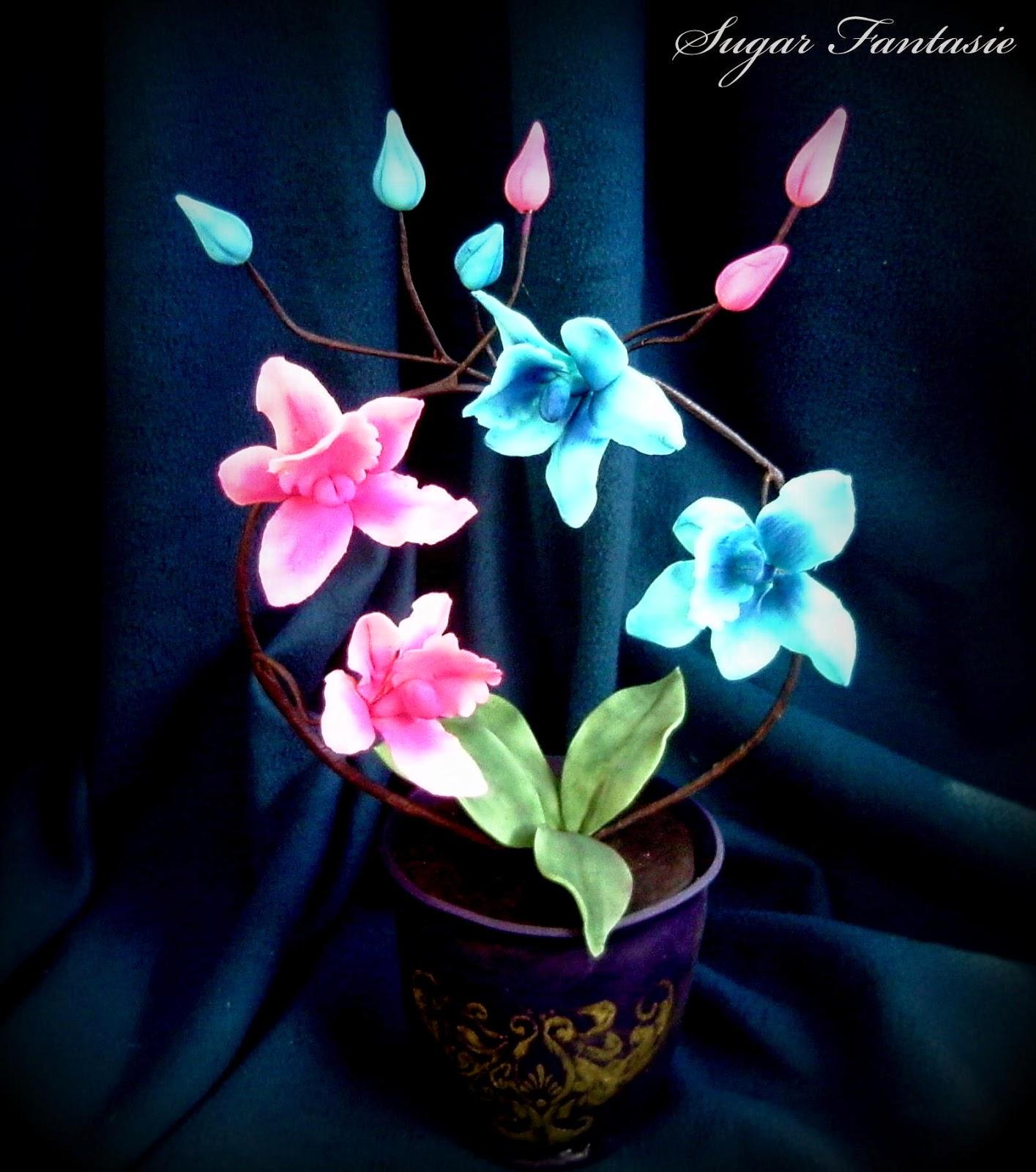 Cukor orchidea