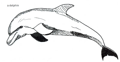 642 Things to Draw - Dolphin - Pen and Ink 2012 © Ana Tirolese