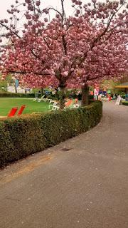 Bruges Pink Trees