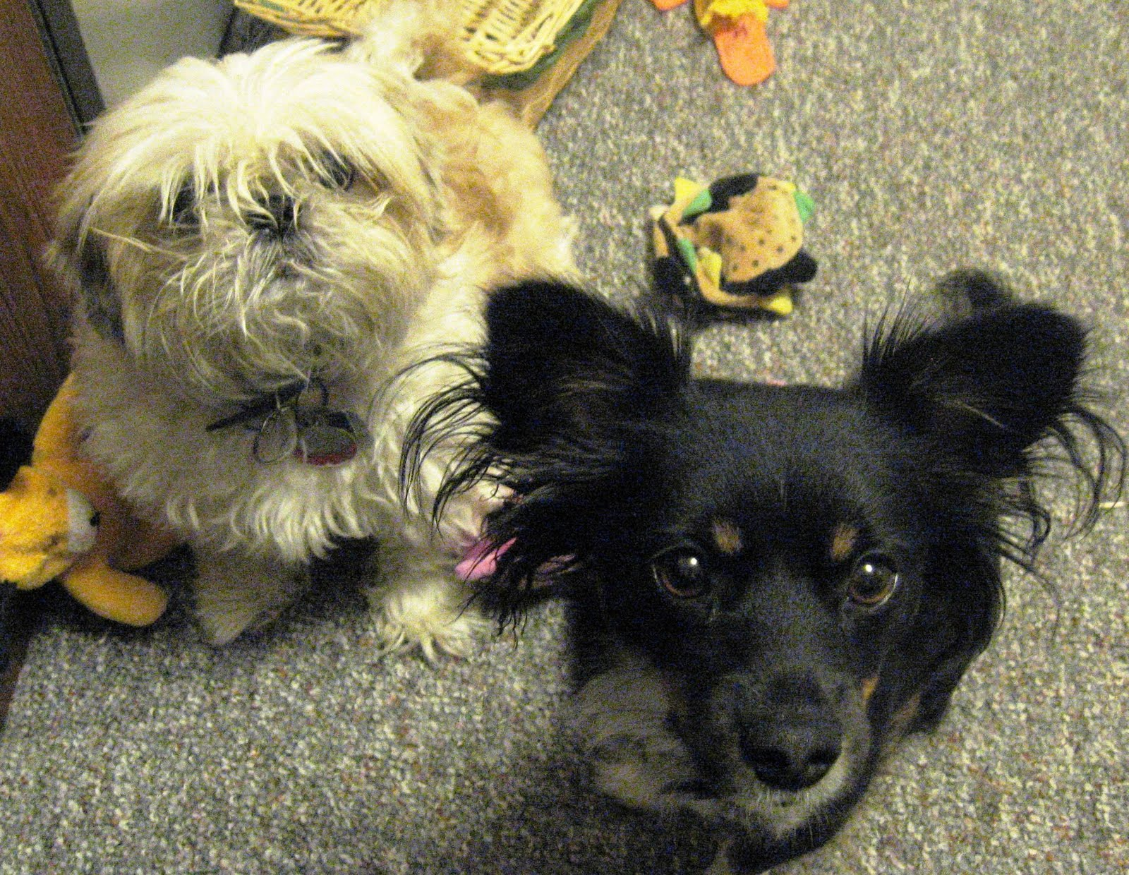 Casey & Taco - What did we do wrong, Mommy?. Photo by Carley. All copyrights reserved