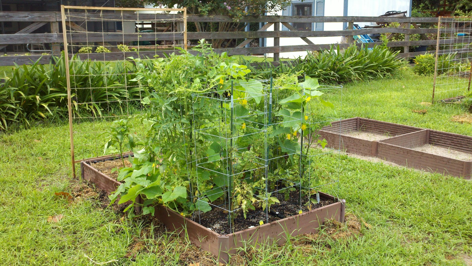Vegetable Gardening In Sw Florida The Beginning Of A Passion