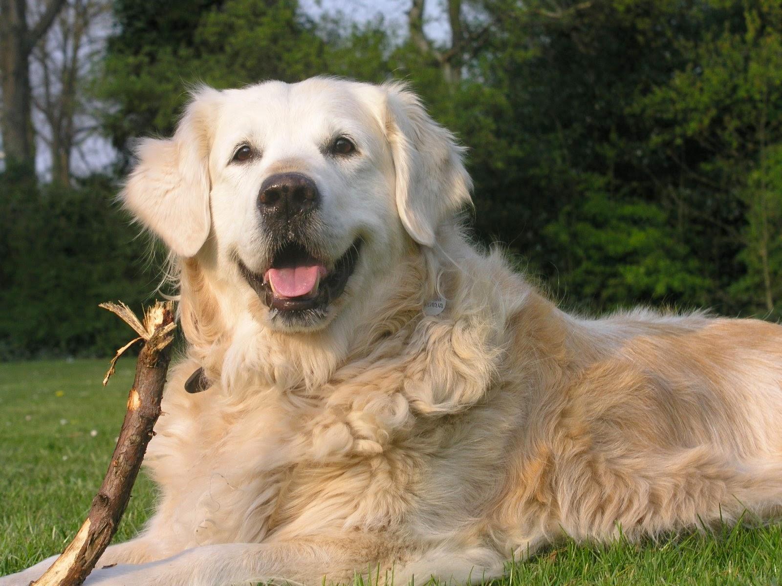 Anjing Selamatkan Kakek Yang Tersedak Bawang