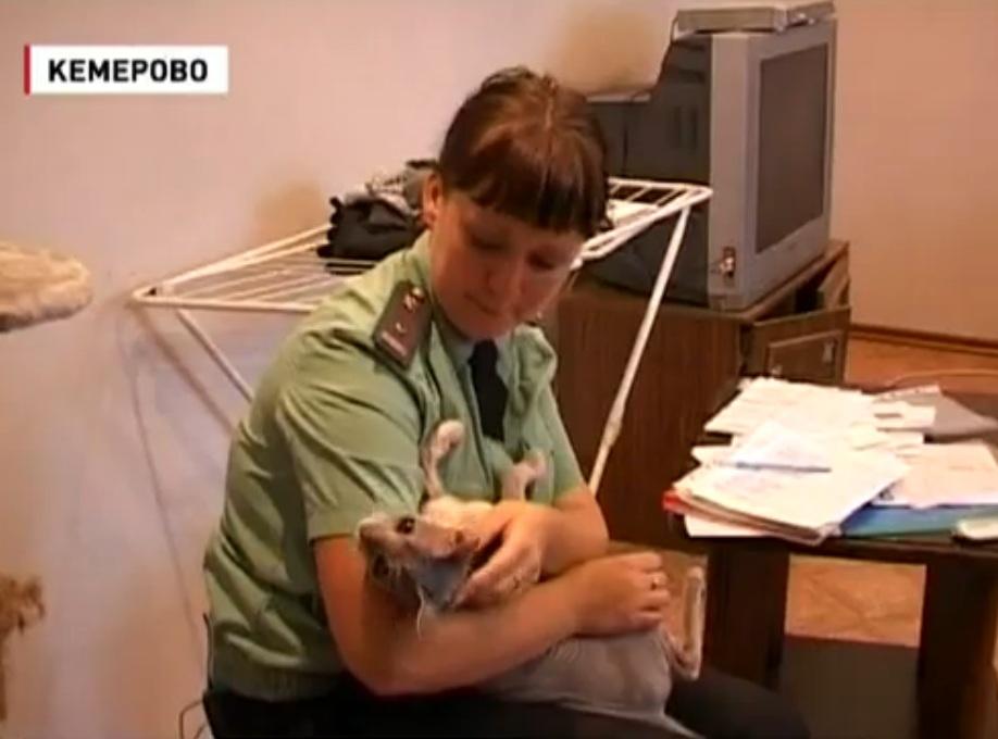 В Кемерово кот арестован за долги хозяина