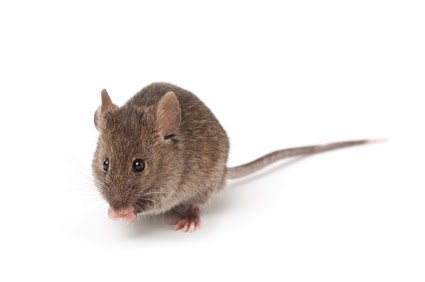 mouse control tips