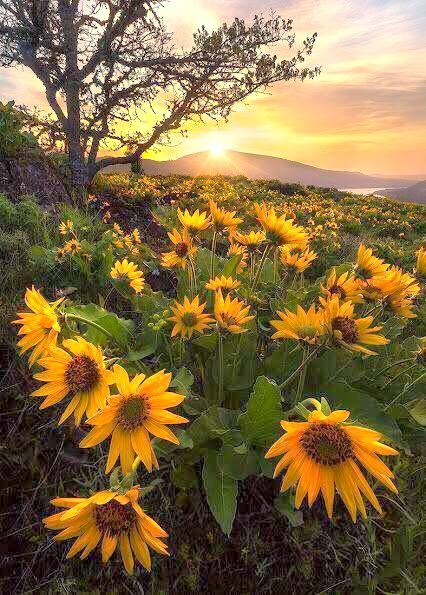 keindahan alam semulajadi yang sementara