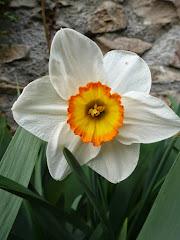 Es tiempo de pasear al sol y disfrutar de la primavera