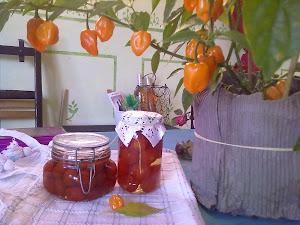 pomodorini conservati sotto aceto