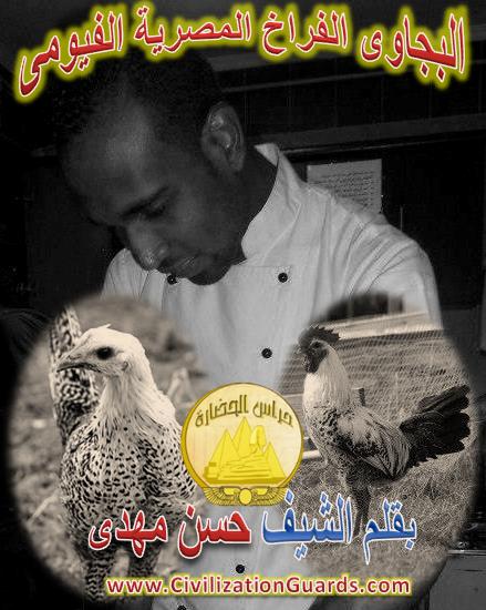 البجاوى الفراخ المصرية الفيومى