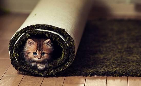 gambar-kucing-comel-dalam-karpet