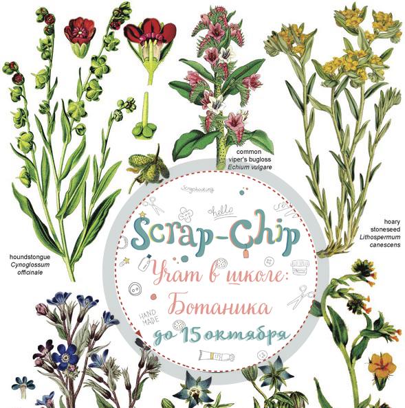 Учат в школе: Ботаника