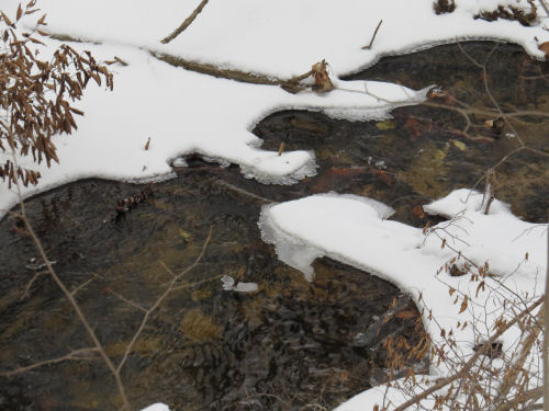 partially frozen creek