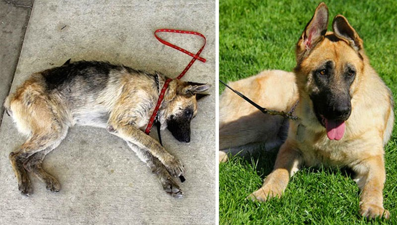 Vita - 16 Before-and-After Photos Of Rescued Dogs