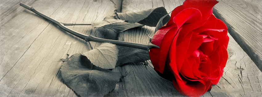 Lonely Red Rose