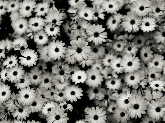 черно белые картинки цветов: