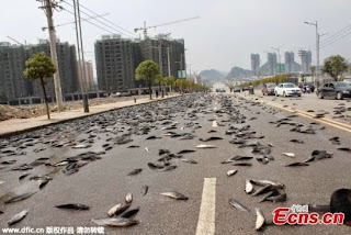 Thousands of catfish cover road in China